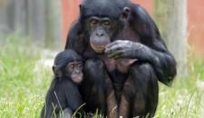 Wates bags zoo deal
